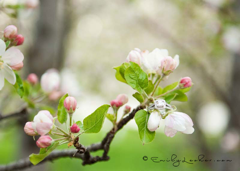wedding ring on blossoms