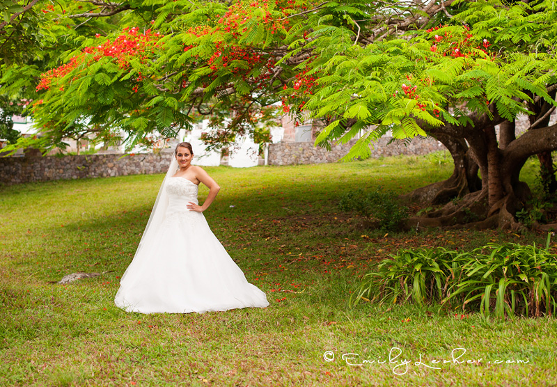 Bride in front of July Tree in the Caribbeaan